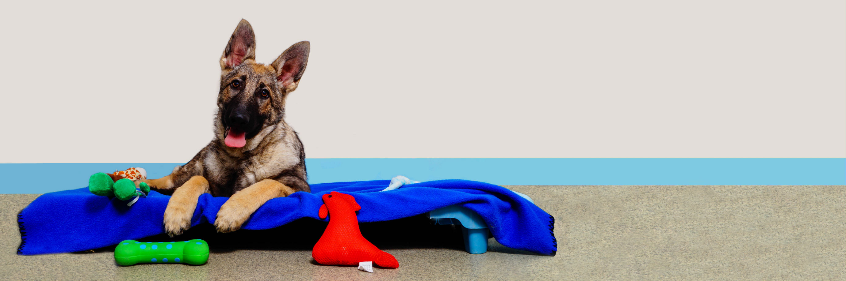 Kennelwood Pet Resorts: St Louis Doggy Daycare | Boarding