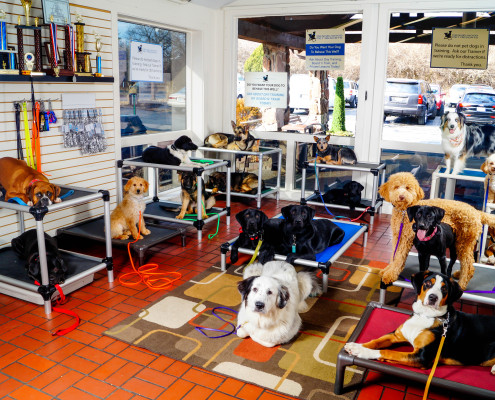 Dog Boarding School in St Louis