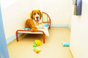 Pet Resort Kennels St Peters