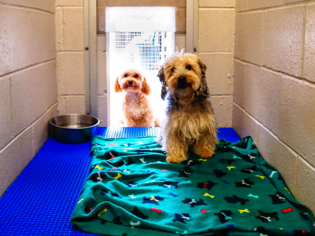 Pets Boarding - Patio at Kennelwood Pet Resorts