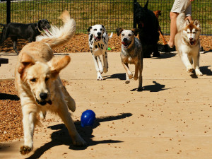 Canine Daycare Maryville IL