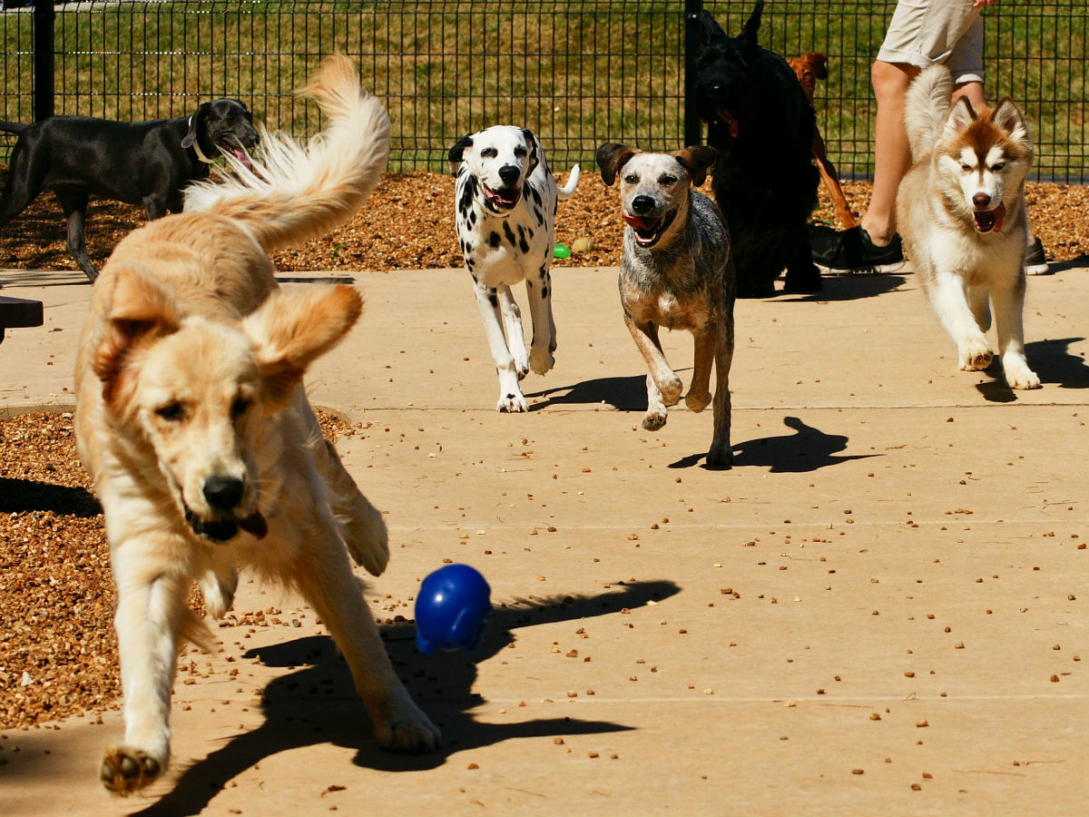 Dog Day Camps - DayCamp at Kennelwood Pet Resorts