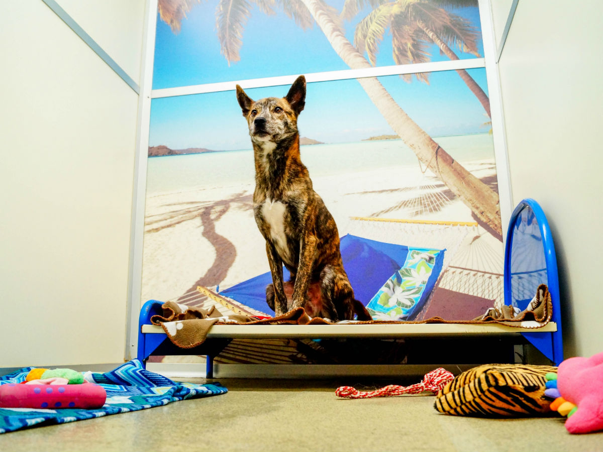 Pets Boarding - Grand Cabana at Kennelwood Pet Resorts