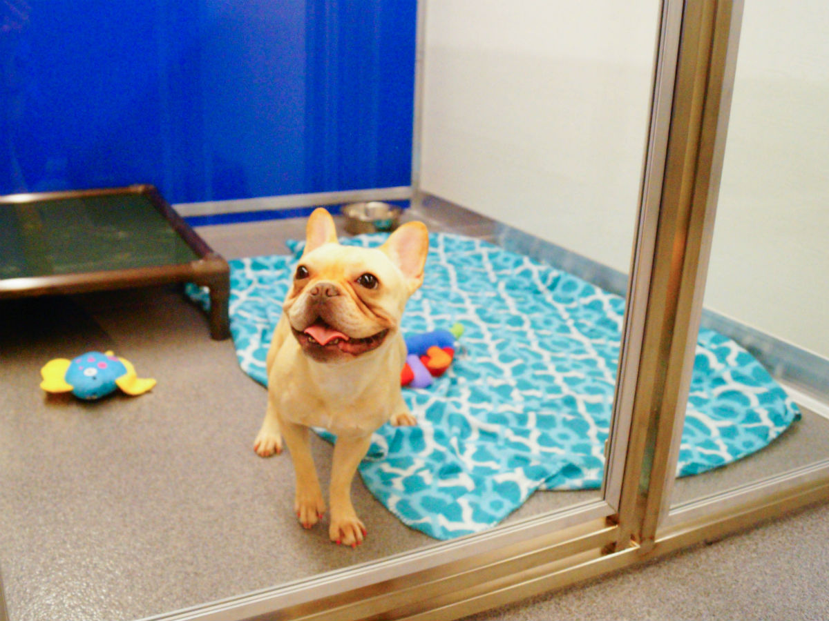 Pets Boarding - Suites at Kennelwood Pet Resorts