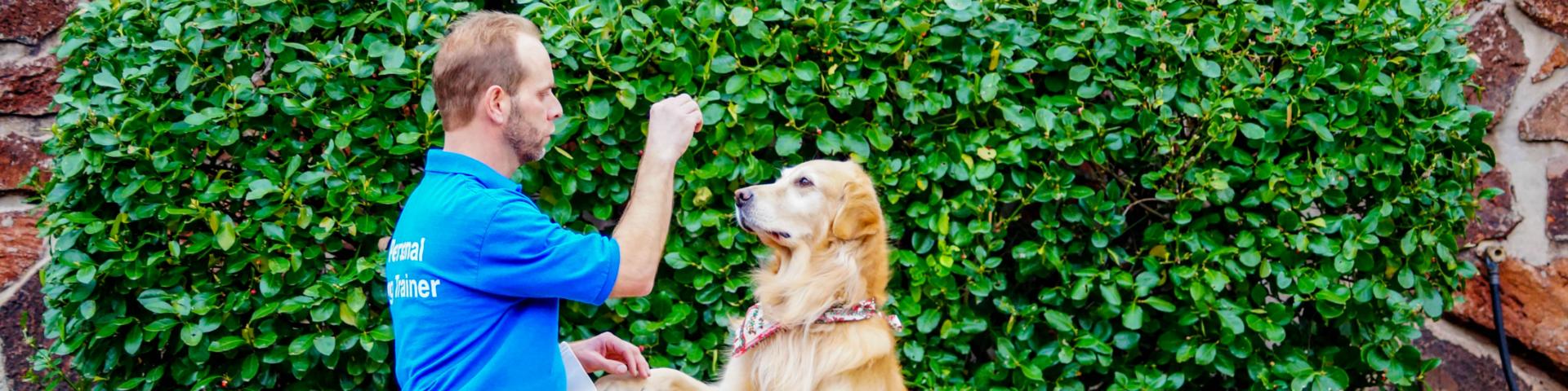 Dog Training St Louis Kennelwood Pet Resorts