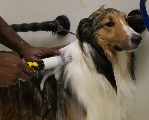 Flea Bath for Dogs in Missouri