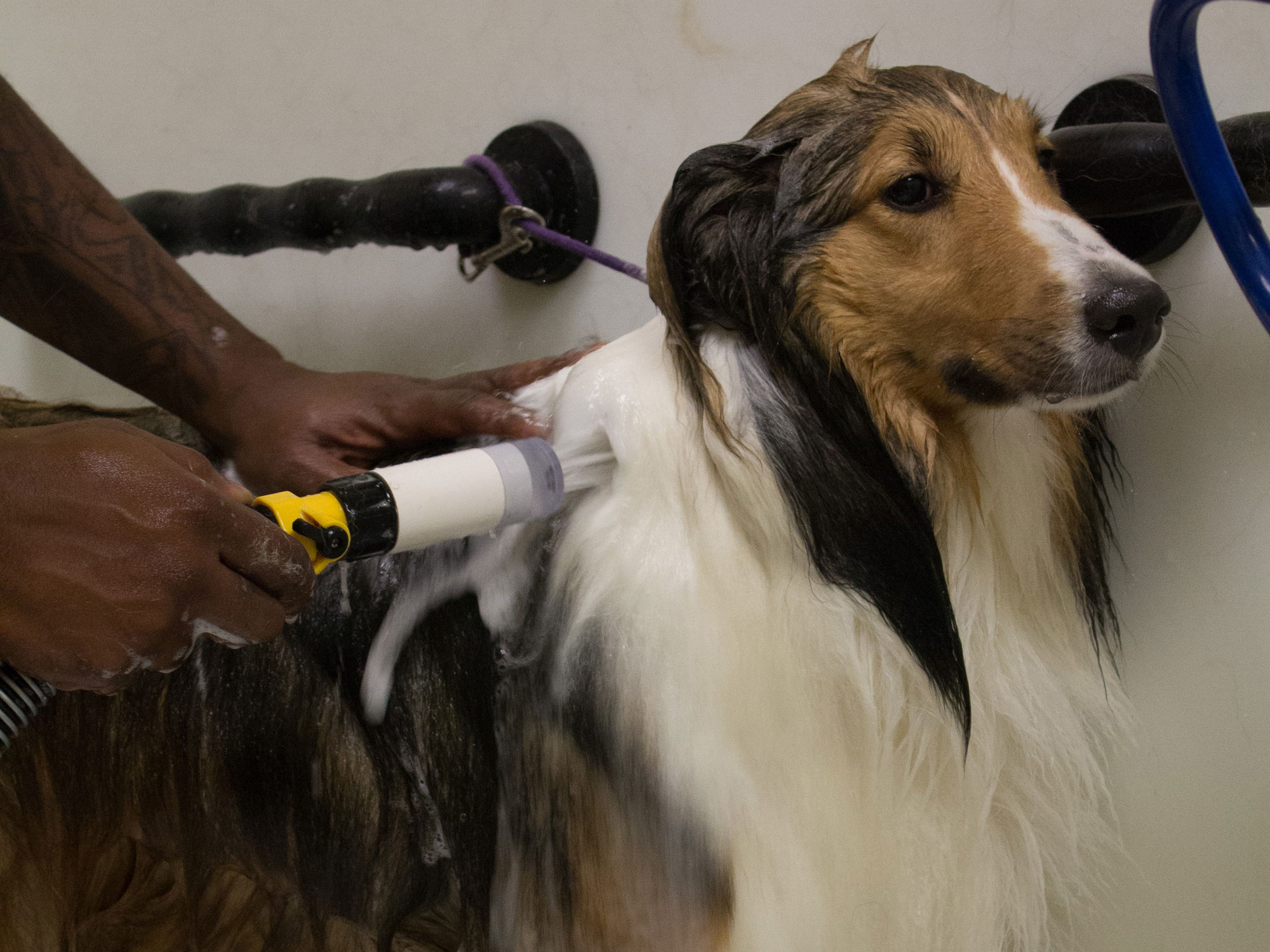 Pet Groomer - Bath and Brush at Kennelwood Pet Resorts