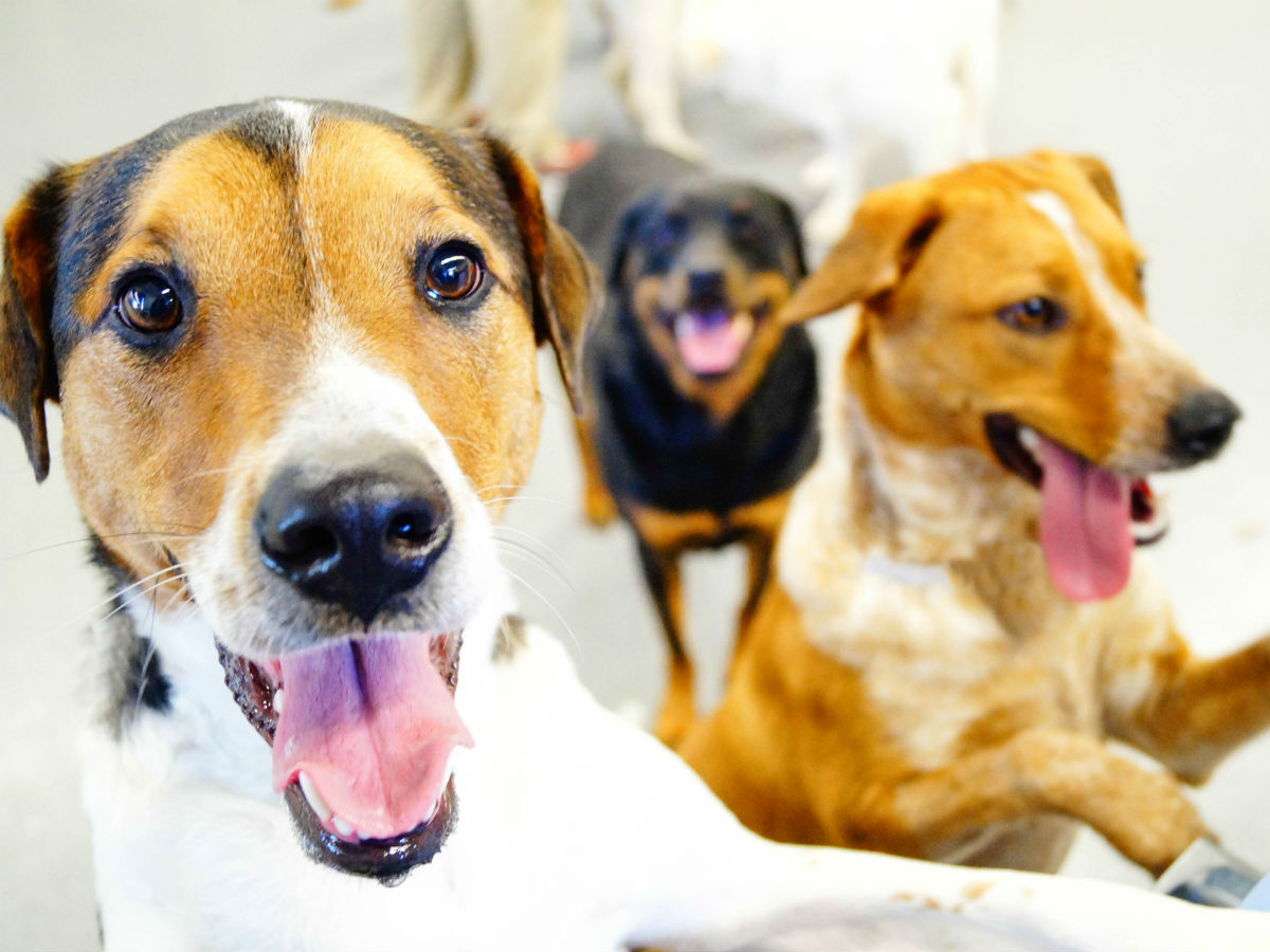 Dog Day Camps - Day Camp at Kennelwood Pet Resorts