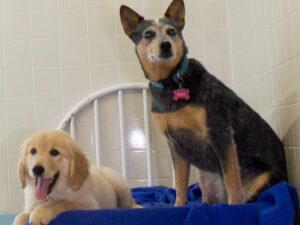 Dog Kennels St Louis