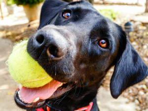 St Louis Dog & Puppy Day Care Cost