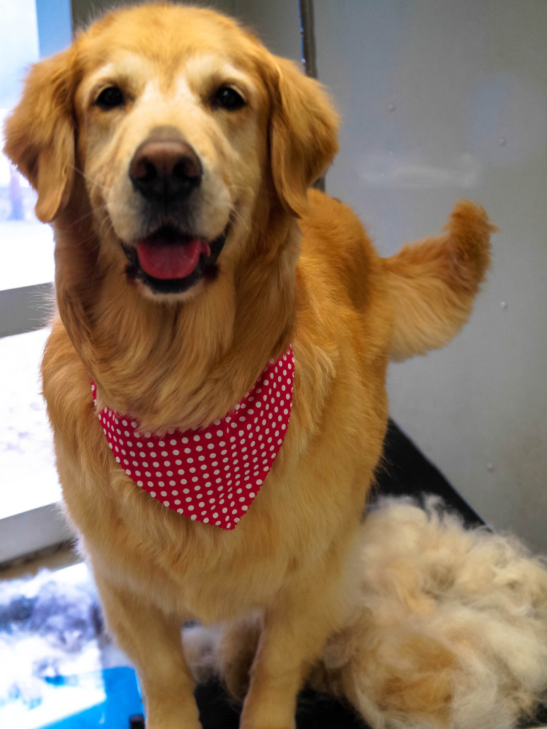 Cheap Dog Grooming Near Maryville IL