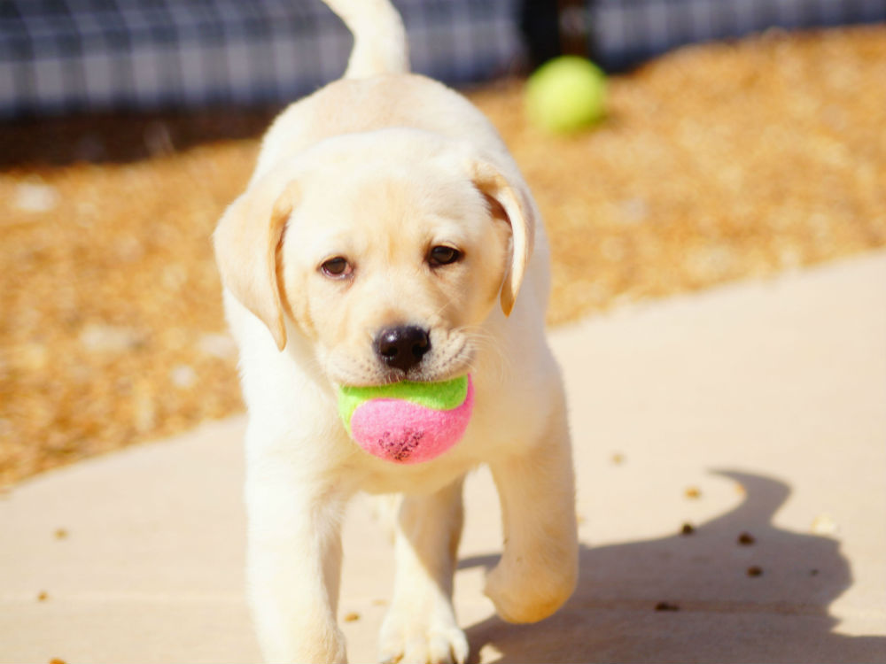 Dog Training Courses - Train 'n Play at Kennelwood Pet Resorts