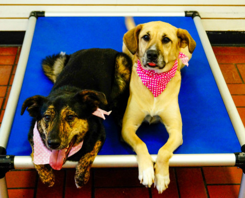 Dog Training Classes in Missouri