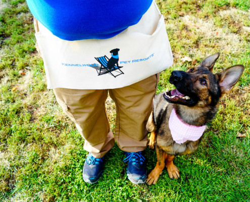 Private Dog Trainer St Louis