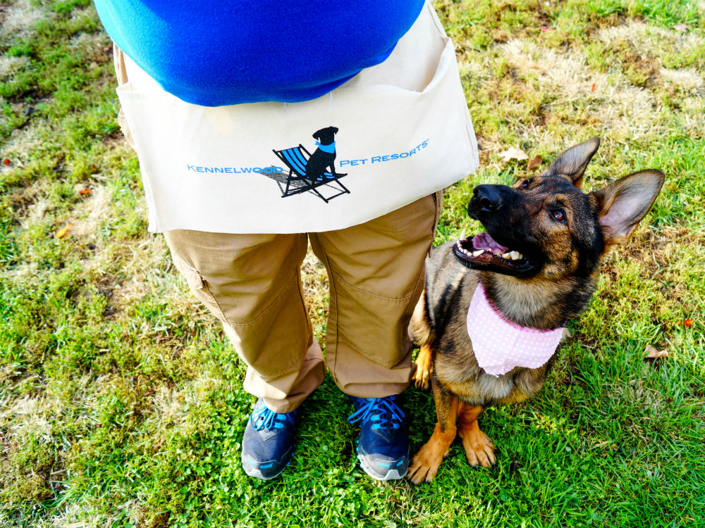 Dog Training Courses - Private Lessons at Kennelwood Pet Resorts