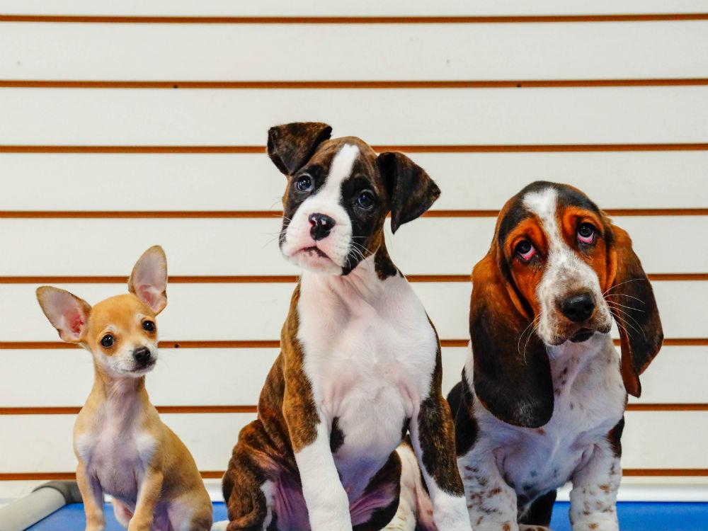 Dog Training Courses - Puppy training at Kennelwood Pet Resorts